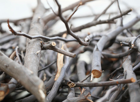 Sticks and stones may break our bones...