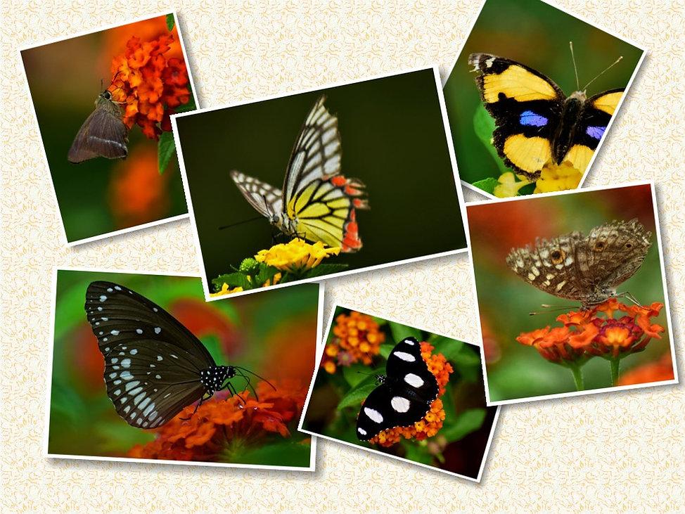 butterflies - pillar.jpg