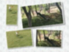 birds - pillar.jpg