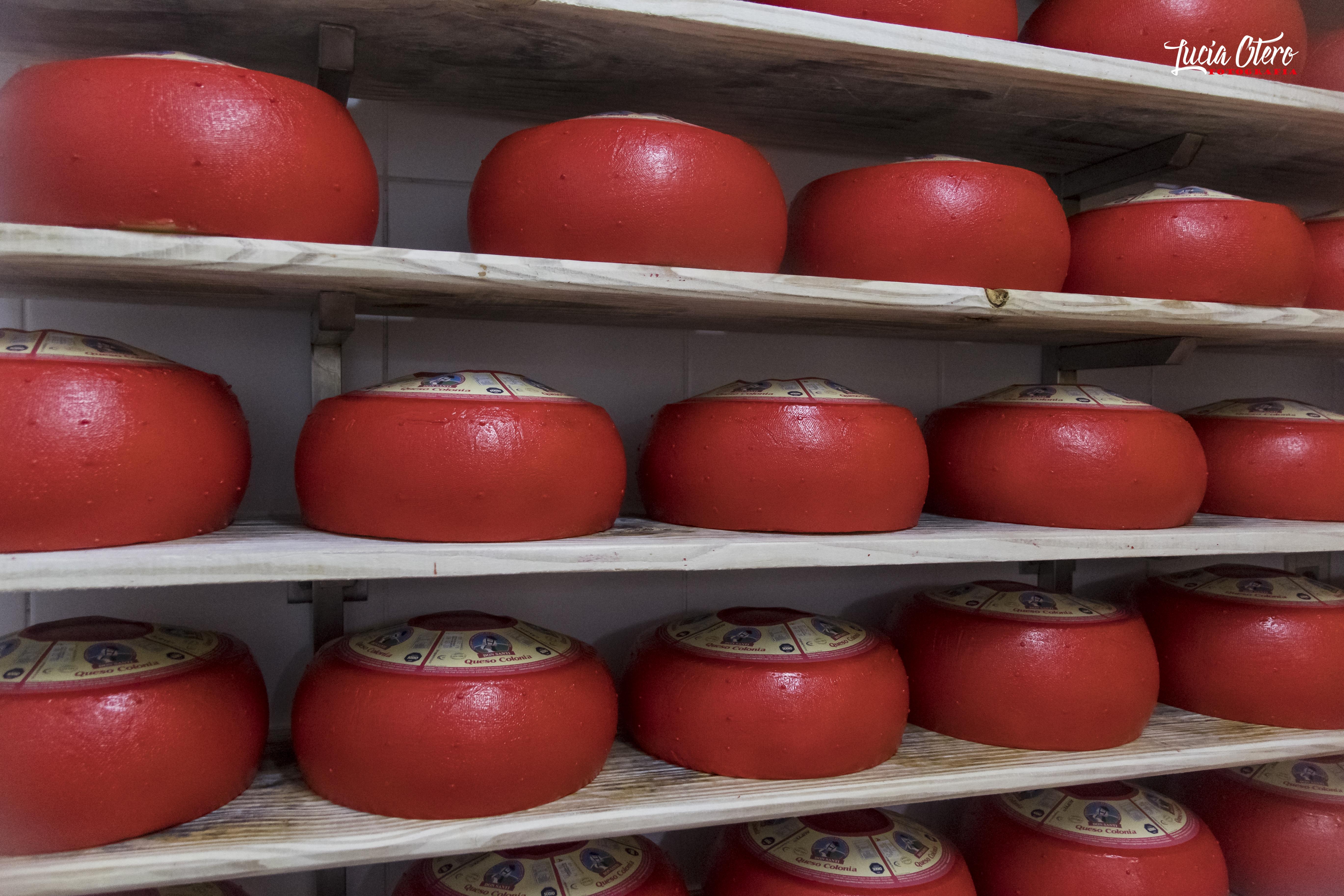 Maduración de queso Colonia