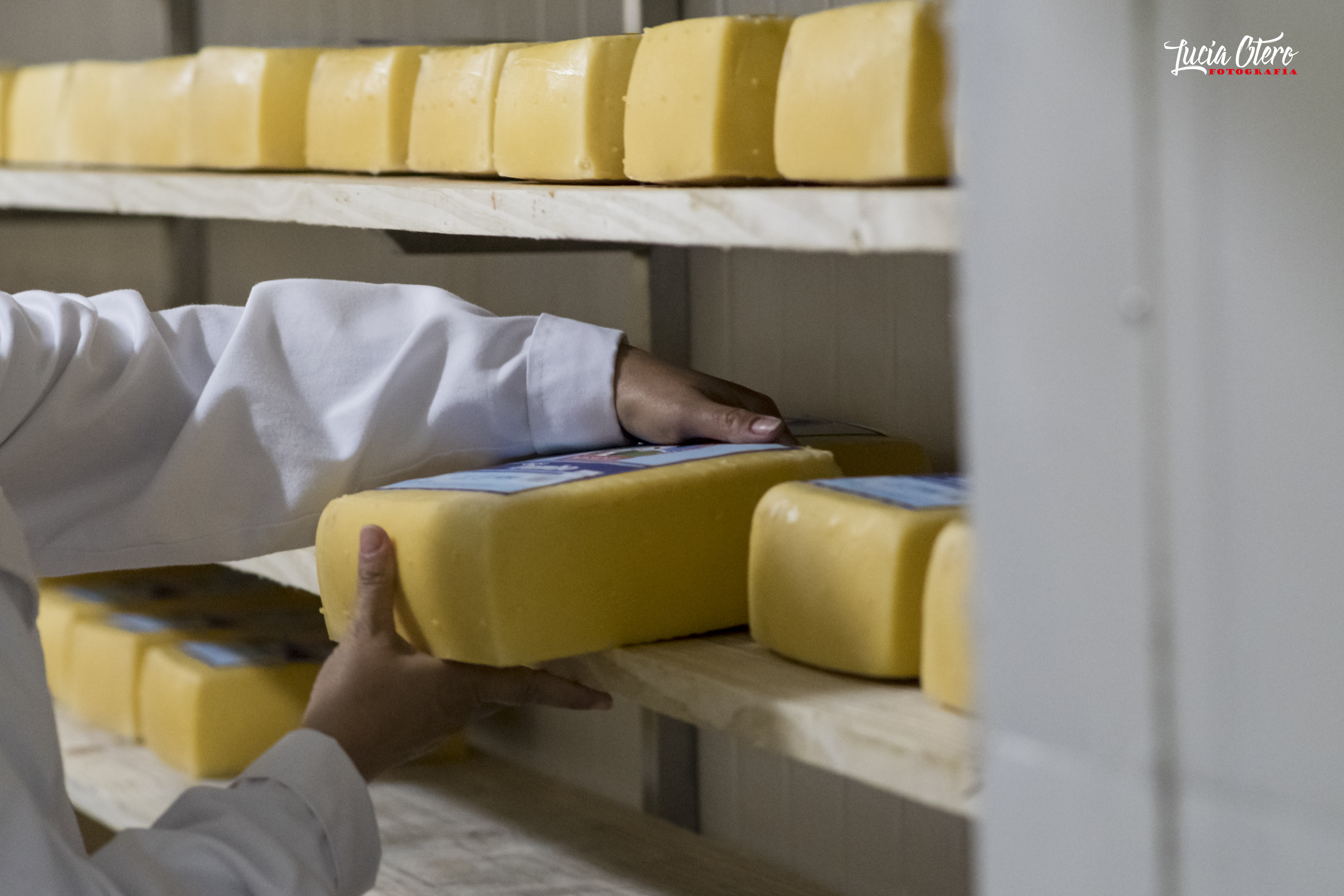 Maduración de queso Dambo