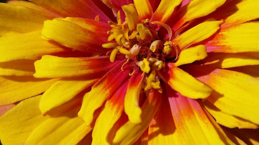 Burnt Flowers, yellow