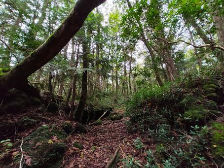 AOKIGAHARA, LA FORESTA DEI SUICIDI AI PIEDI DEL MONTE FUJI