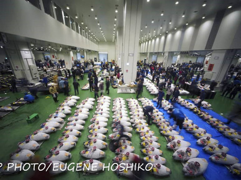 Il nuovo mercato del pesce di Toyosu