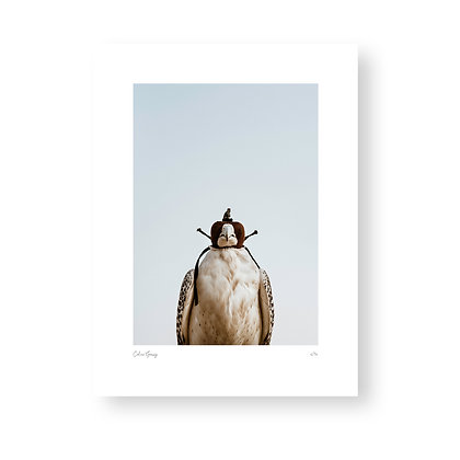 Fine Art Print Falcon by Celine