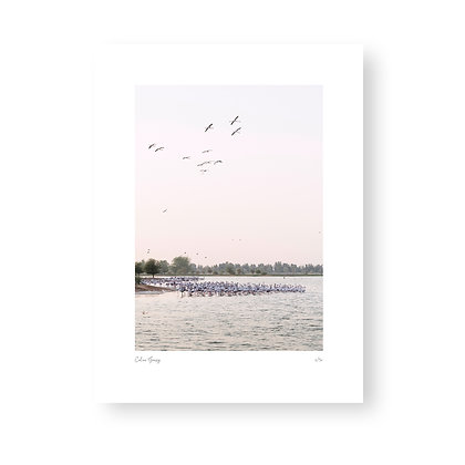 Fine Art Print Flamingo Lake by Celine