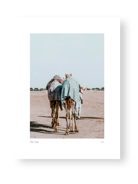 Camels by Akemi Hoshi