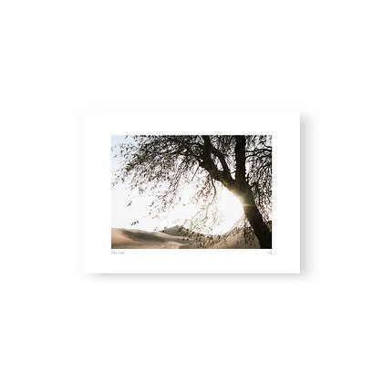 Fine Art Print Desert Tree by Akemi