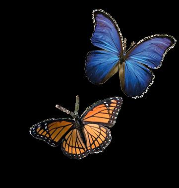 _borboletas.png