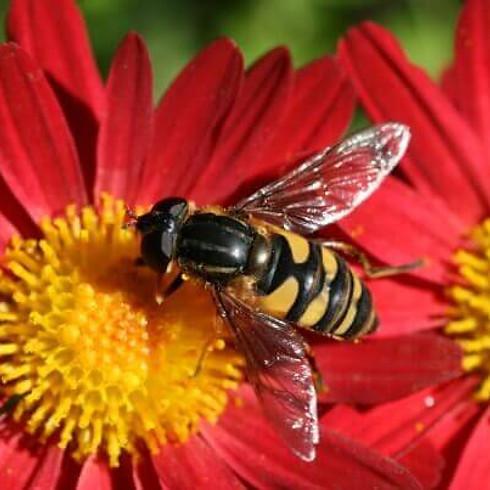 Good Evening WBOA - Don't Bee Fooled