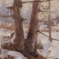 Winter White Pine