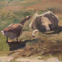 Scolding Goose