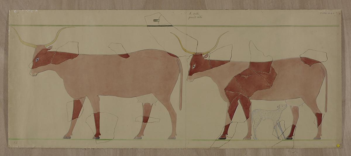 Marguerite Naville, Dessins préparatoires pour l'édition du sarcophage de la princesse Kemsit (vaches bleues et vaches rouges). © Musée d'art et d'histoire de la Ville de Genève, inv. A 2006-0030-009-2