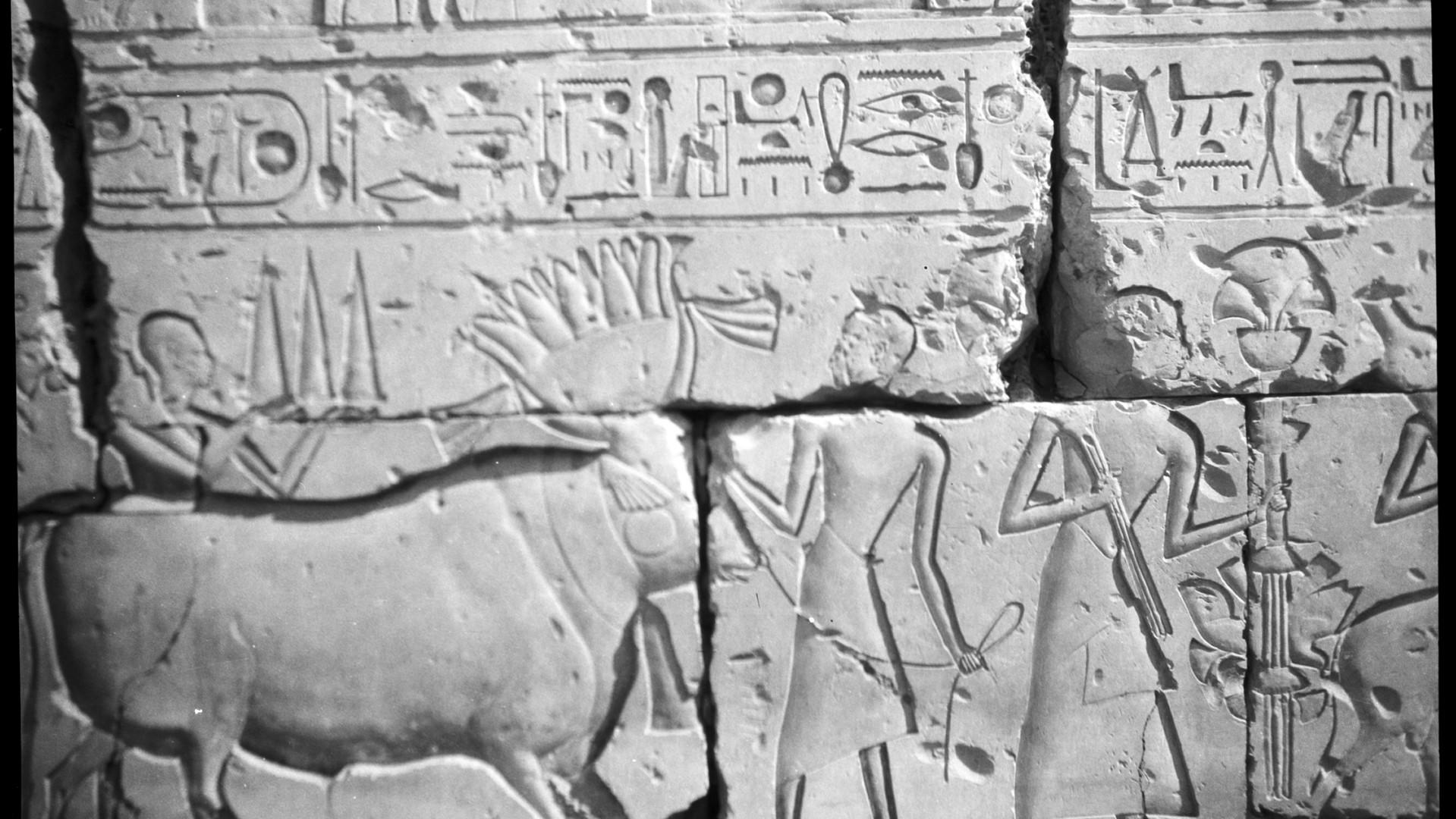 Marguerite Naville : procession sur les murs du temple de Ramsès II à Abydos (négatif) © Musée d'art et d'histoire de la Ville de Genève, inv. A 2006-0030-054-036
