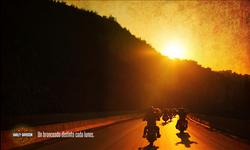 Harley Davidson ¨Bronceado¨