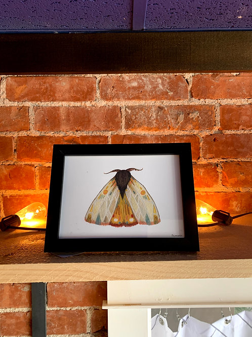 "Jess Polanshek 5x7 ""Collector: Moth 9"""