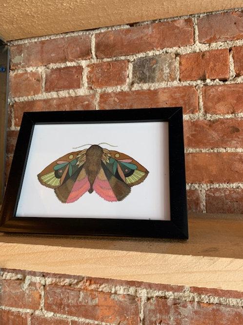 "Jess Polanshek 5x7 ""Collector: Moth 4"""