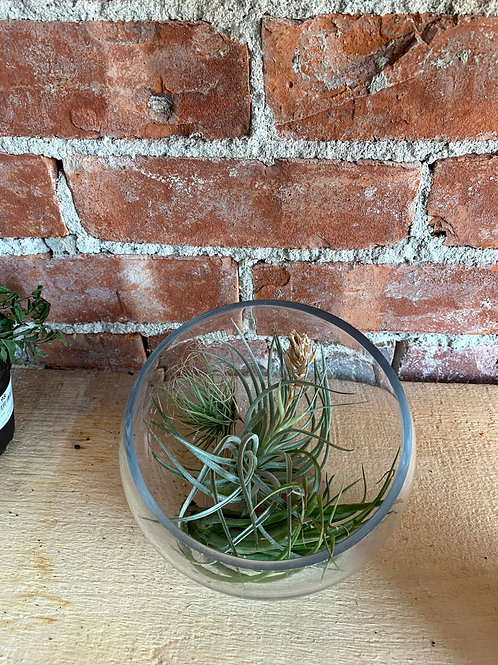 Bowls with Air Plants