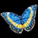Papillon Aquarelle 18
