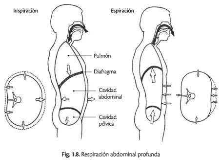 La respiración abdominal profunda o respiración Yóguica completa