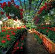 Flor Box OXO | Flower History | Top 3 Hotel Gardens