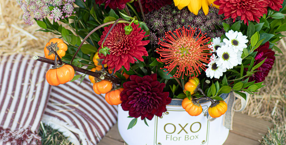 OXO Collection | Pumpkin Spice