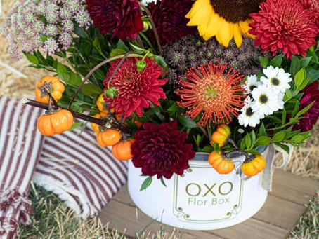 Flor Box OXO | OXO Debut Collection 2019 | Pumpkin Spice