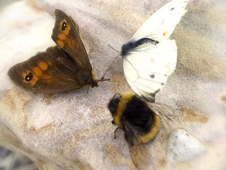 hingsThatFly #Wings #Butterfly #Moth and a #BumbleBee. Found in my Mum's #garden #oasis. Placed on a