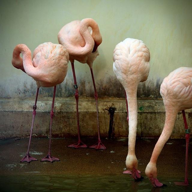 Instagram - My #obsession #pinkFlamingos #pink #birds make me #smile