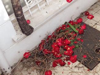 #fallen #flowers #swept. #London #Chelsea. #Red