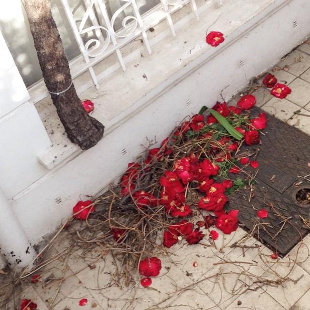 Instagram - #fallen #flowers #swept. #London #Chelsea.jpg