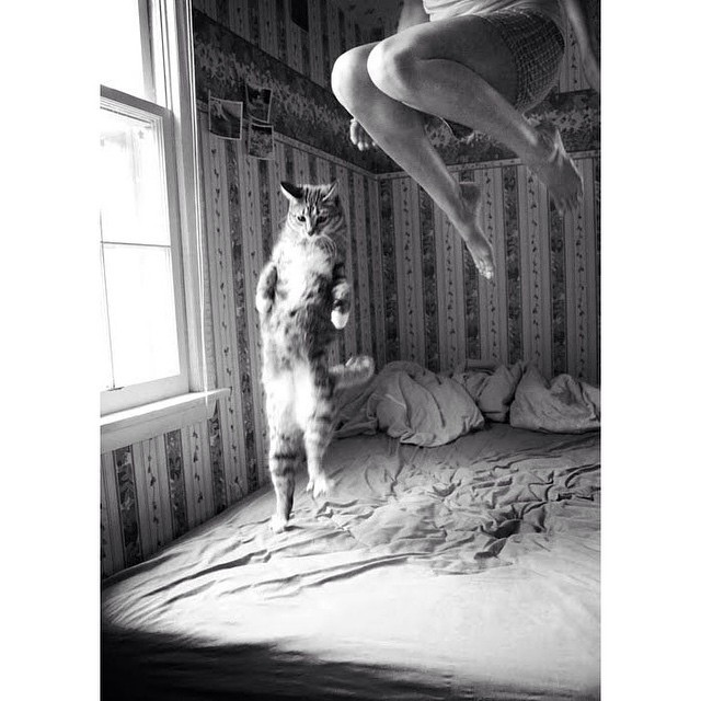 Instagram - #Jump around! #GoodAfternoon #Cat + #Girl #jumparound #smile #quirky