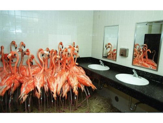 #Flamingos take #refuge in a #bathroom at #MiamiMetroZoo, #Sept14, #1999 as #tropical-#storm force #