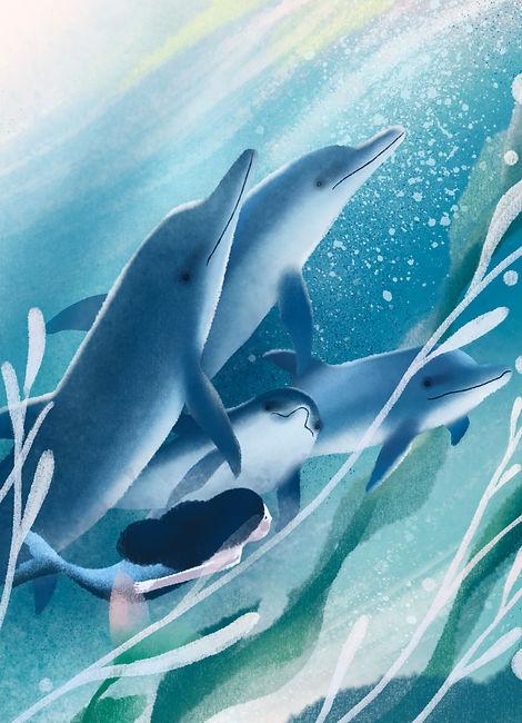 海报-海豚.jpg