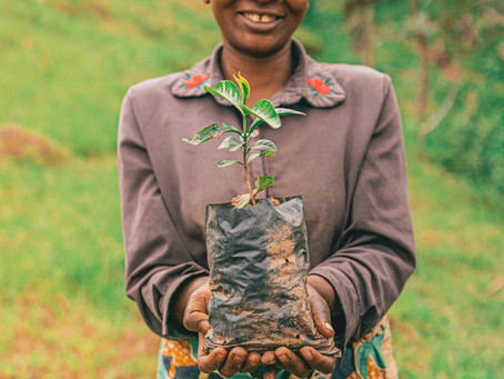 RYMAX LUBRICANTS PLANTS 898 TREES IN RWANDA IN COLLABORATION WITH ONE TREE PLANTED