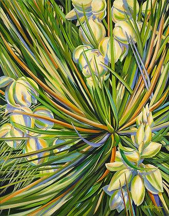 NYL Yucca