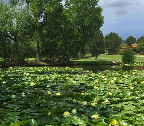 cool off this summer in Tubac