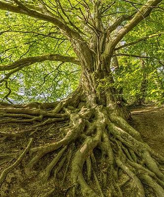 tree good.jpg