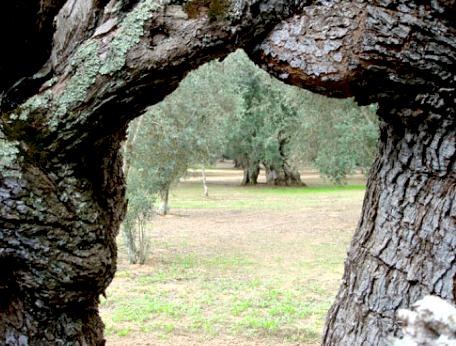 oliomerico_trees