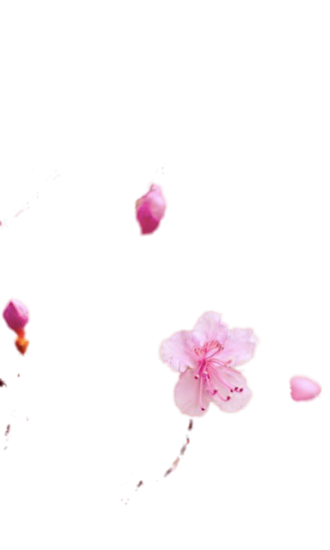 pinkblosom cut.png