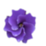 purple spiral flower cut.png