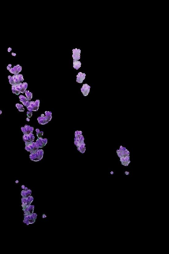 lavender bits cut.png