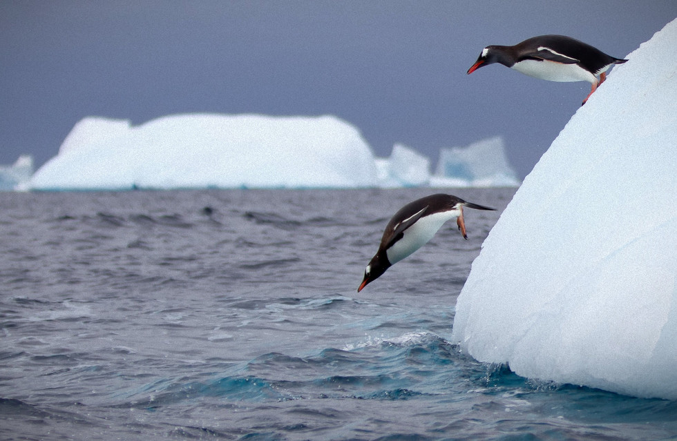 pinguin_edited.jpg