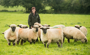 Lindsay with her Lydiard Oxford Down flock