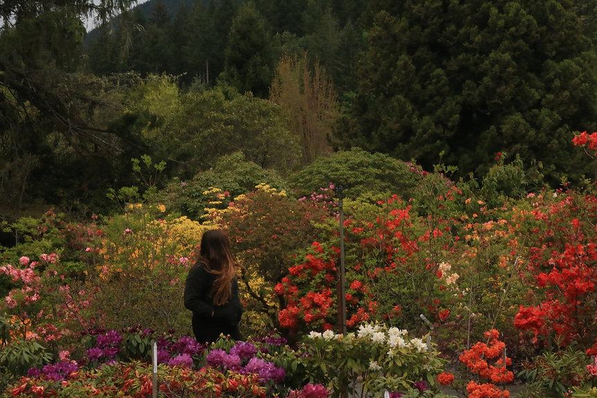 rhody-garden