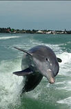 Dolphin_Stephen2.jpeg