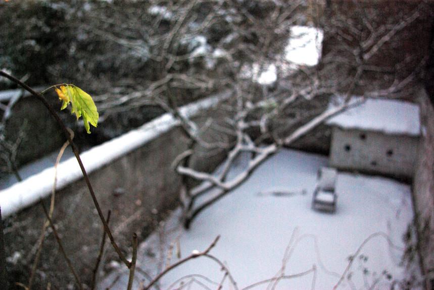 Green winter
