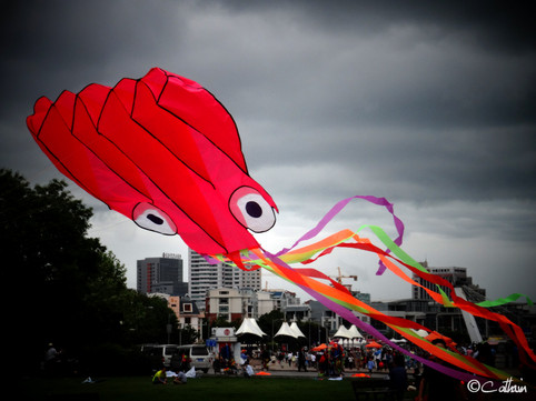 Octopus Kite flying in Qingdao, China.