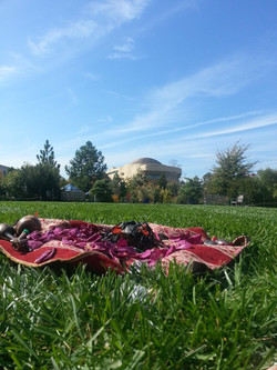 Sara's Mesa on grass of DC Mall