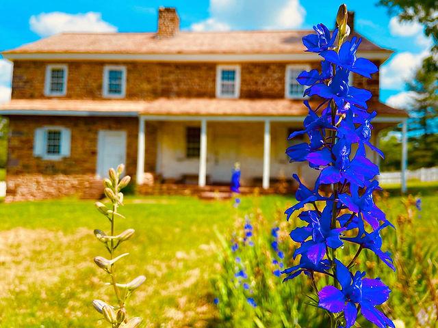 boone house blue flower.jpg